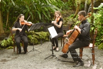 cooper estate string quartet