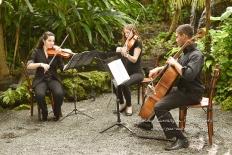 cooper estate string quartet